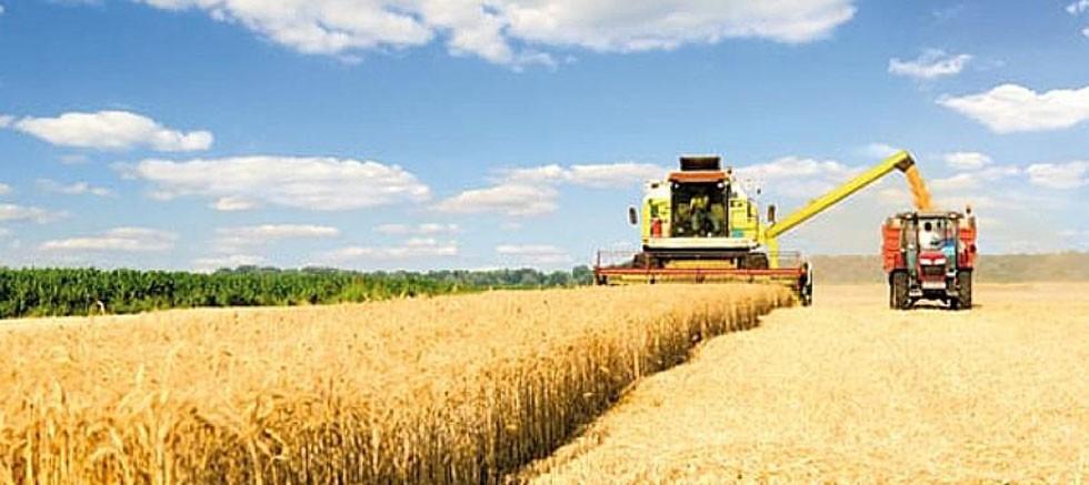 Ağustos ayına ilişkin Tarım ÜFE verisi açıklandı