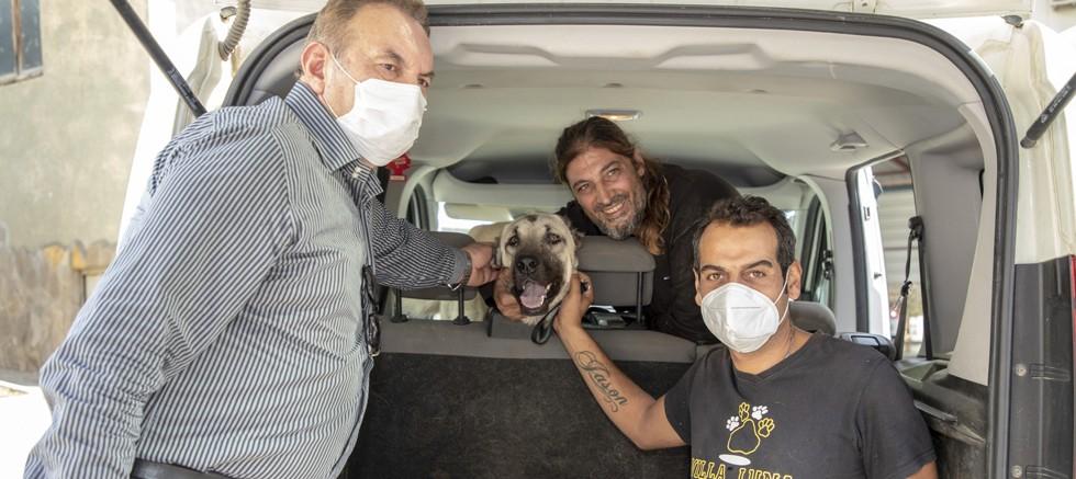 Aracın çarptığı sokak köpeği tedavisinin ardından sahiplendirildi
