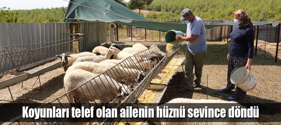 Başkan Böcek mağdur aileye 15 koyun hediye etti