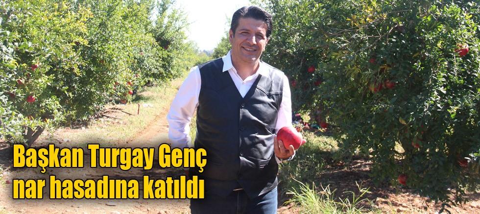 Başkan Turgay Genç Nar Hasadına katıldı