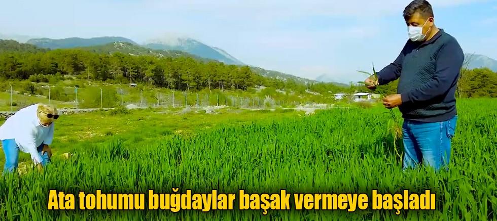 Büyükşehir Belediyesi atıl tarım alanlarını üretime kazandırıyor