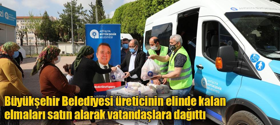 Büyükşehir Belediyesi üreticinin elinde kalan elmaları satın alarak vatandaşlara dağıttı
