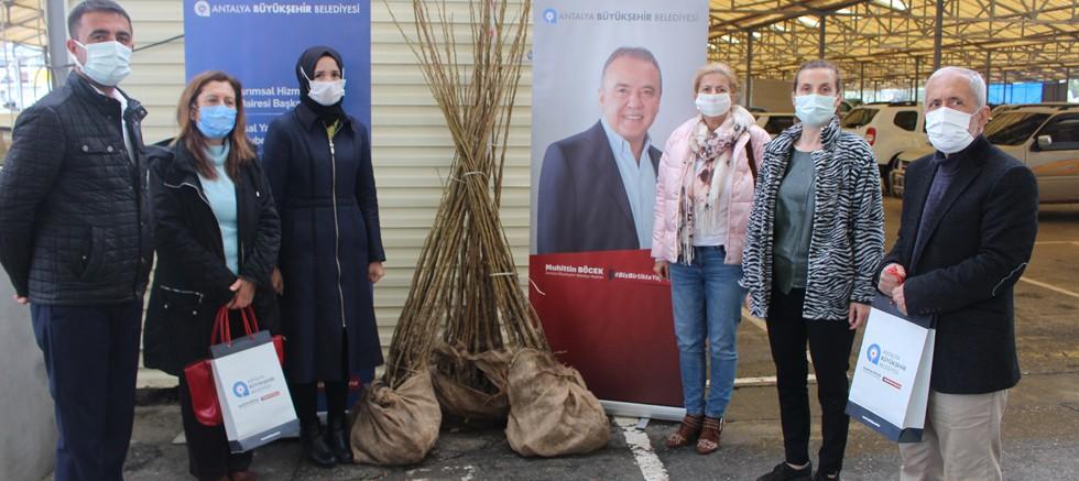 Gazipaşalı kadın girişimcilere dut fidanı desteği