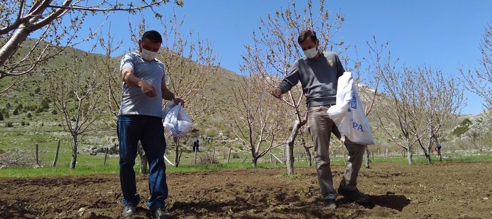 Gündoğmuş'ta üreticilere arı otu verildi