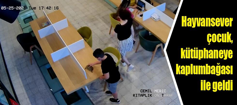 Hayvansever çocuk, kütüphaneye kaplumbağası ile geldi