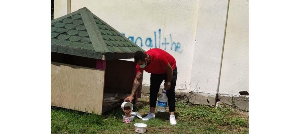Kemer Belediyesi sokak hayvanlarını yalnız bırakmıyor