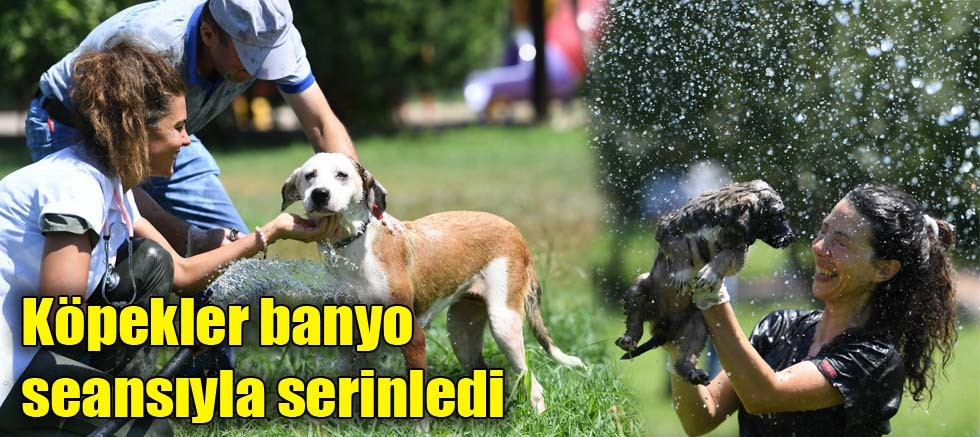 Köpekler banyo seansıyla serinledi