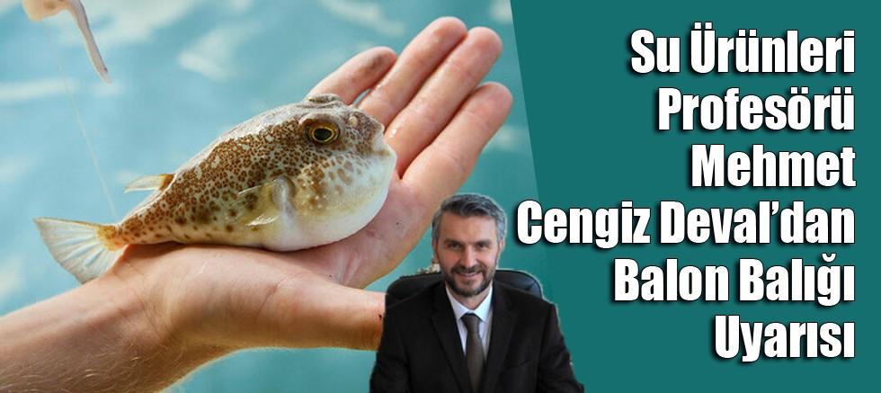 Prof. Dr. Mehmet Cengiz Deval: Balon Balıkları Dünyadaki En Zehirli İkinci Hayvan