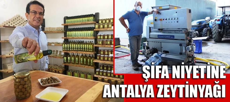 Şifa niyetine Antalya zeytinyağı