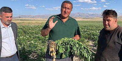 """Gürer: """"Patates markette 3 TL, üretici ise kaygılı"""""""