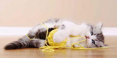 Kedi ve köpeklerin yuttuğu yabancı cisimler hayatlarını riske edebilir!