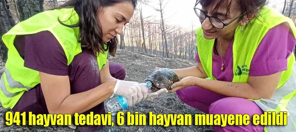 Yangından etkilenen hayvanlara Büyükşehir şefkati